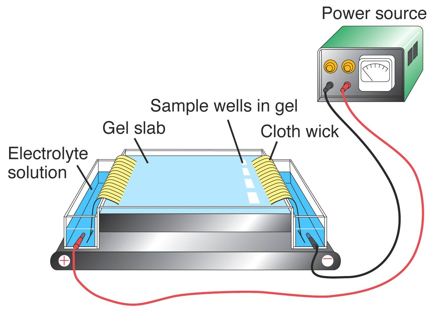 gel electrophersis Technology presentation protein electrophoresis is a well-established technique routinely used in clinical laboratories for screening of protein abnormalities in serum and other biological fluids.