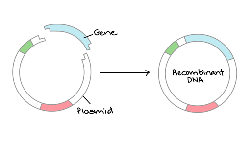 DNA and Cloning