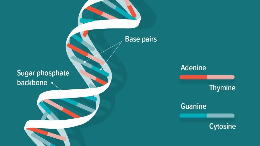 What Does DNA Stand For