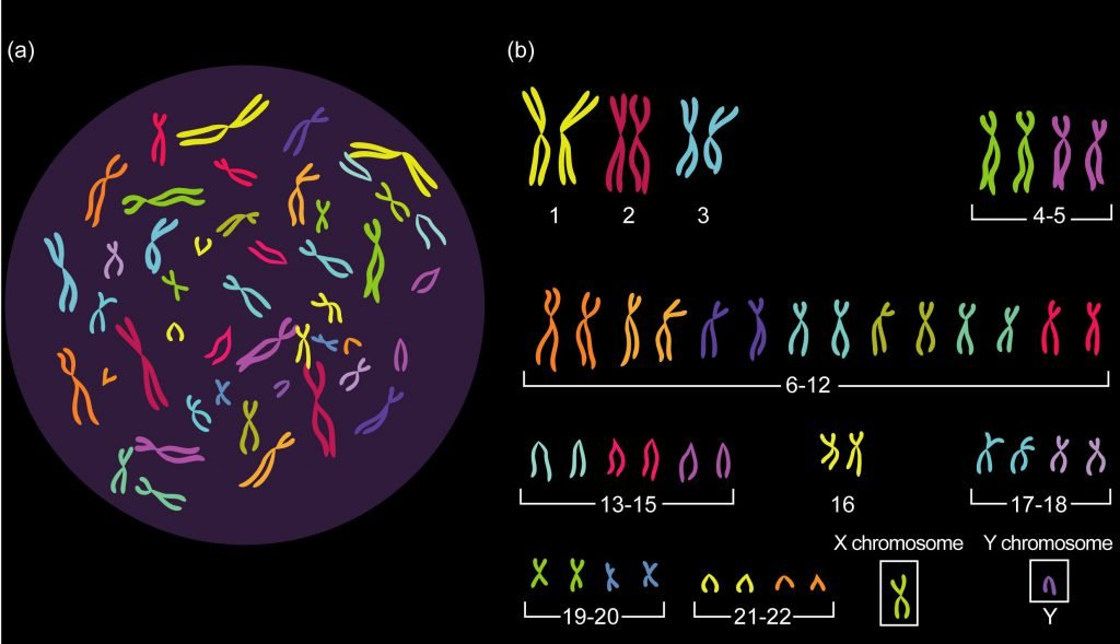 Why is DNA important?