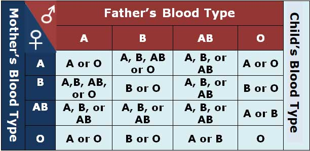 red blood cells compatibility chart